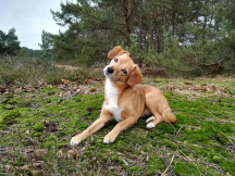 Hundetraining, Hundeführerschein